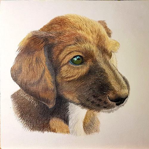 Wege der Tierportraits