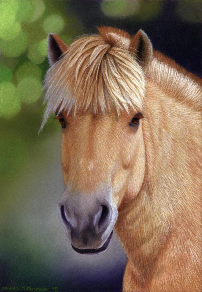 Portrait Norweger Pferd