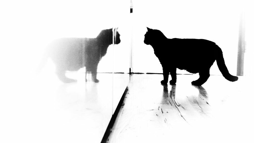 Telepathische Kommunikation einer Katze