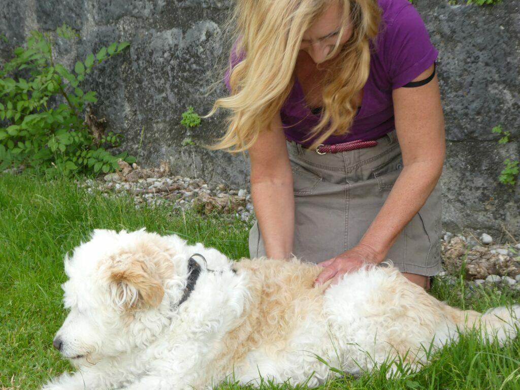 Wege der Tierheilung